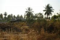 12 Rai in Pong 74203