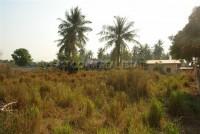 1 Rai Pong 74195