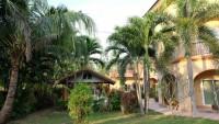 Coco Palm 101585