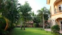 Coco Palm 101587