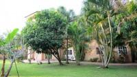 Coco Palm 101588