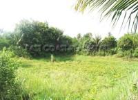 Takien Tai Land  Land For Sale in  East Pattaya