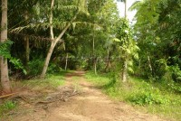 Land Near Nungnuch Garden 64665