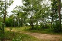 Land Near Nungnuch Garden 64668