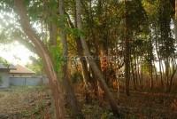 Land Nongplalai  61532