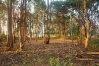 Land Nongplalai  61534
