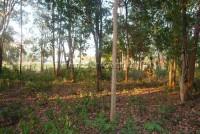 Land Nongplalai  61536
