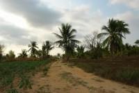 Land Nongplalai  6183