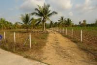 Land Nongplalai  61831