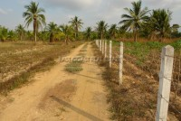 Land Nongplalai  61832