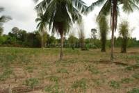 Land Nongplalai  61834