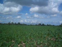 Land Nongplalai  62834