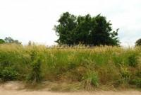 Land Soi Nongkabok 68034