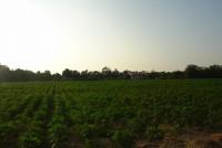 Land Tung Klomman 6799