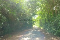 Land in Bang Saray 58681