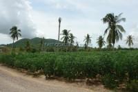 Land in Bang Saray 65622