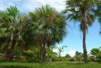 Mabprachan Land 64426