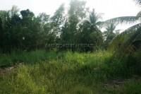 Nong Palai 99632
