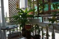Pattaya Tower 58898