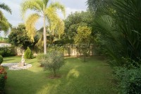 Pattaya Tropical 911014