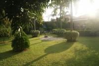 Pattaya Tropical 911017