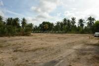 Pong Land 65462