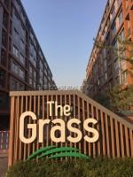 The Grass 9714