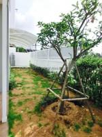 Uraiwan Park Ville 722015